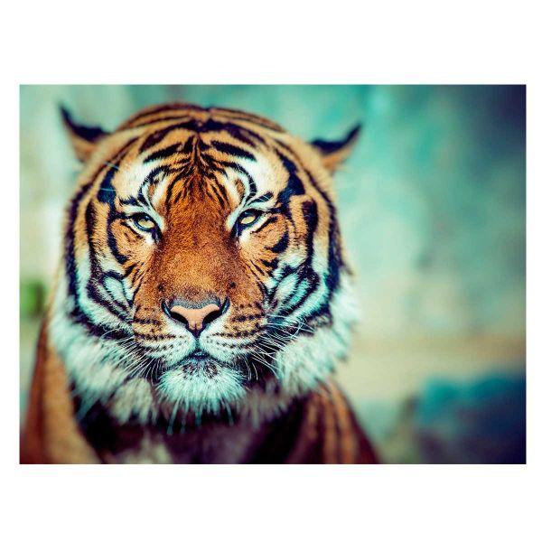 Quadro Tiger 60x80x2.5 Jmy-173721  Kobe